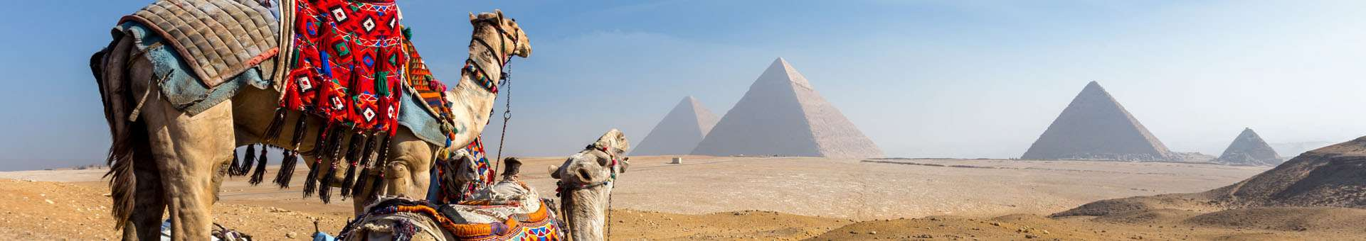 Search Whois information of domain names in Egypt