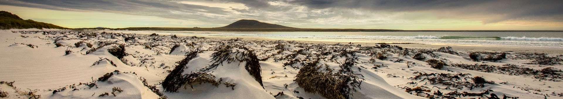 Búsqueda de información Whois de nombres de dominios en Islas Malvinas