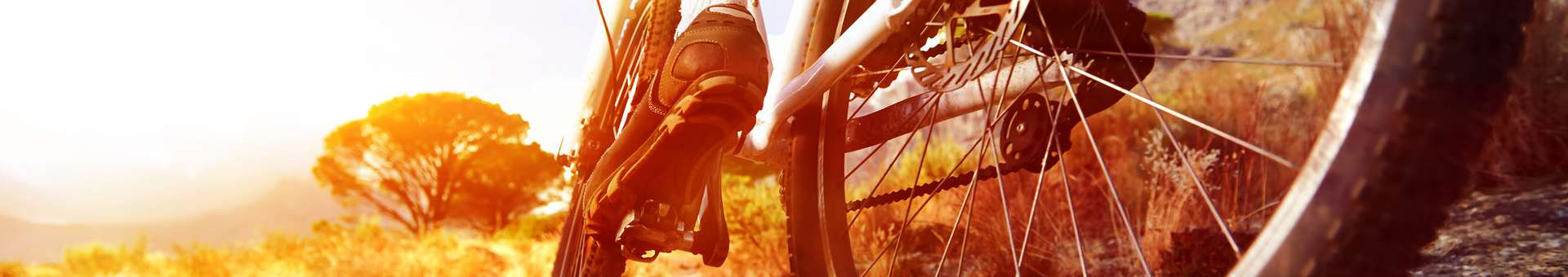 Search Whois information of domain names  .bike
