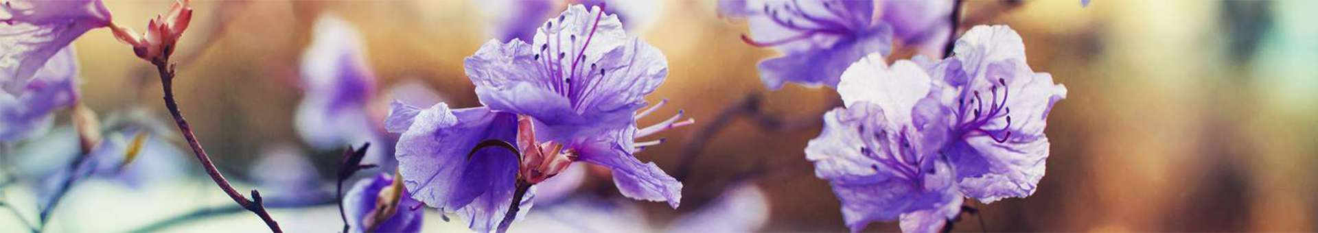 Search Whois information of domain names  .flowers